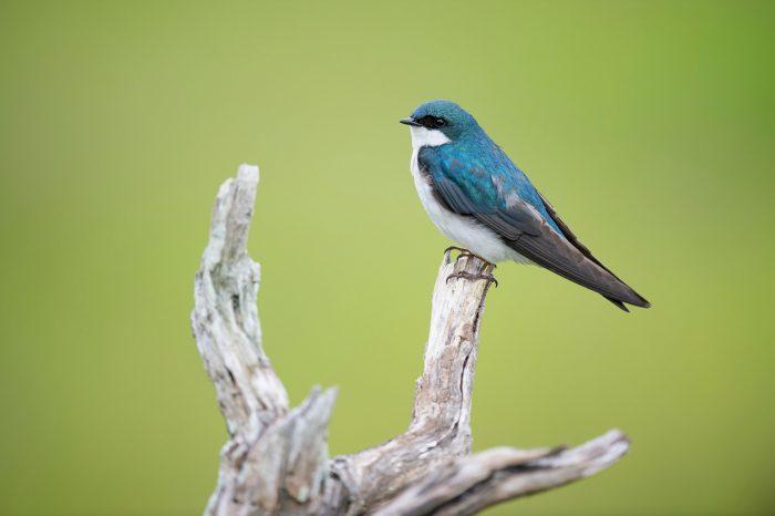 Vogels Fotograferen 12 Tips Vink Academy
