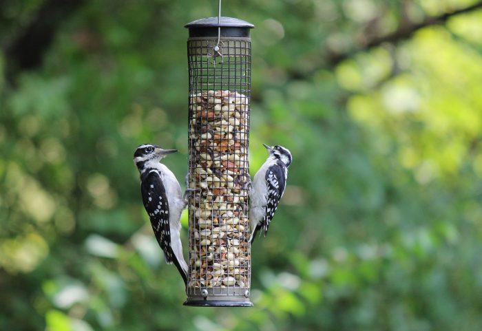Fotografeer vogels of dieren van een afstandje met een afstandsbediening of via je smartphone