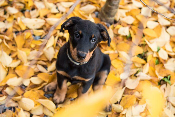 Ik fotografeerde in onze voortuin de kleine JJ bewust van bovenaf, zodat de mooie herfstbladeren om haar heen zag. En niet de geparkeerde auto's erachter.