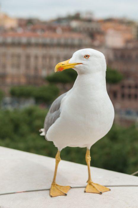 Lens bij vogelfotografie