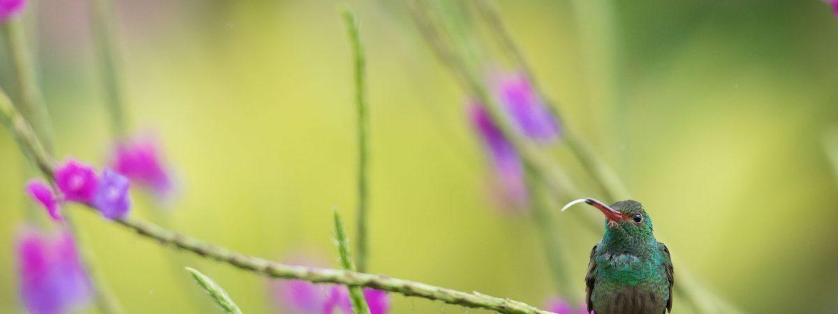 Vogels fotograferen: 12 tips