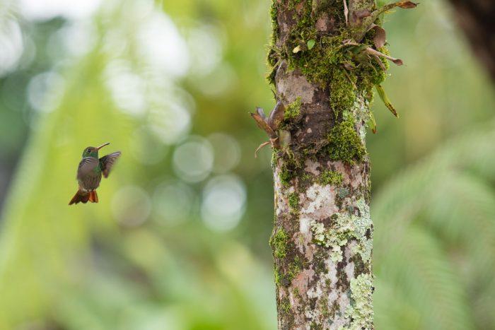 Kolibrie in de lucht