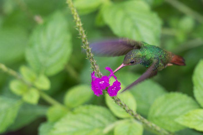 Vogelperspectief bij het fotograferen van vogels