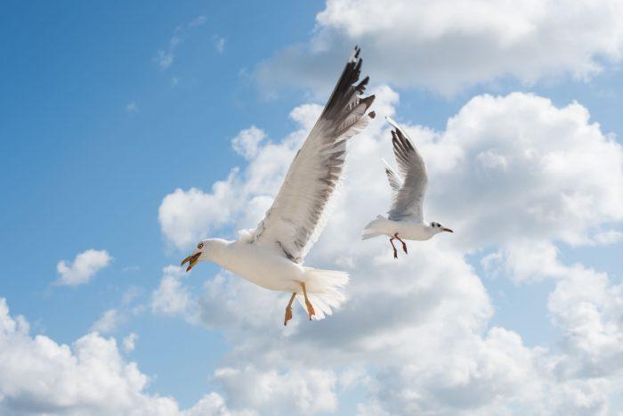 Sluitertijd bij vliegende vogels