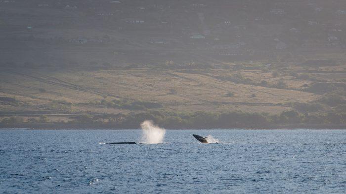 Happy whales :)