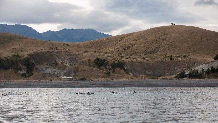 Dolfijnen fotograferen