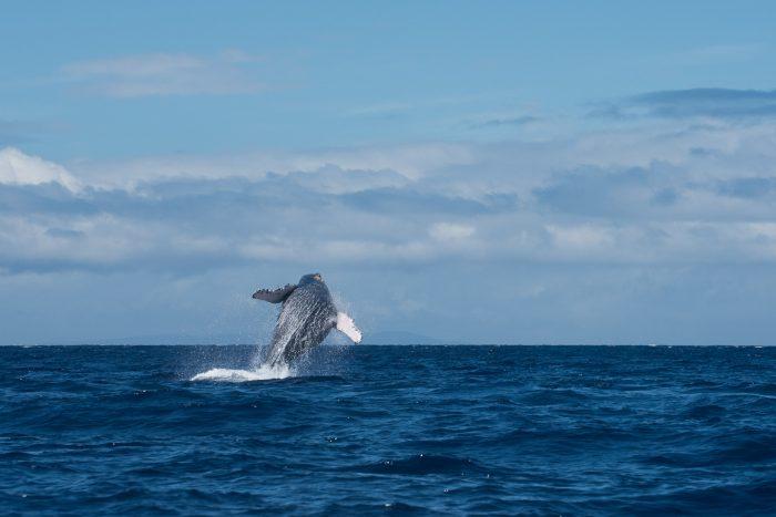Walvissen fotograferen