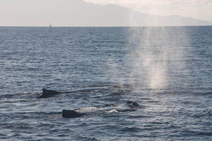 Hoeveel walvissen zie je in deze foto?