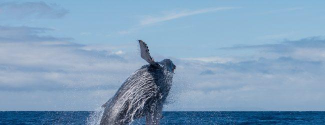 Dolfijnen en walvissen fotograferen: 10 tips