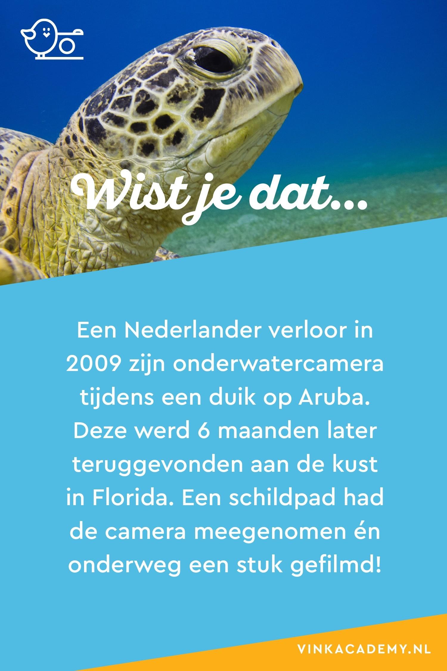 Een Nederlander verloor zijn onderwatercamera bij Aruba, maar die werd 6 maanden later teruggevonden voor de kust van Florida. Een schildpad had de camera meegenomen en onderweg een stukje gefilmd.