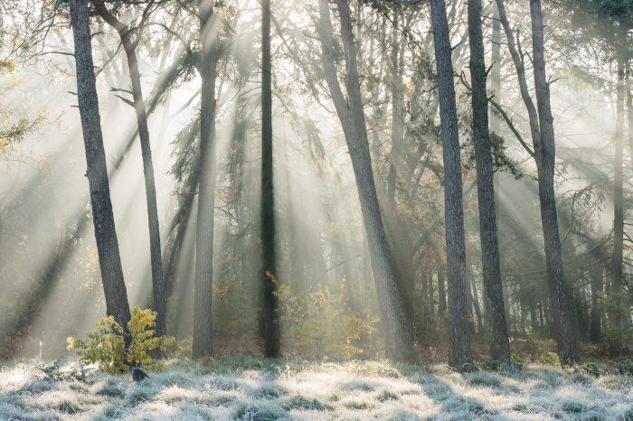 Mist + Zonlicht = Zonneharpen
